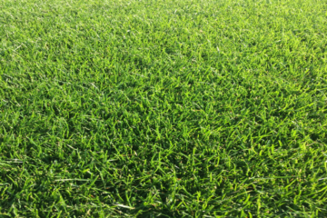 Custom Grown Turf